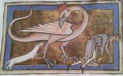 medieval-weasel